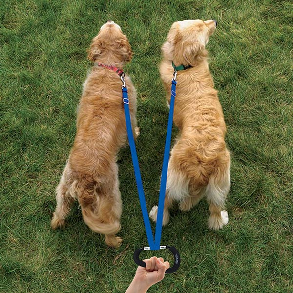Clip-n-Go-6-Dogs-walking-on-leash